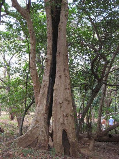 Mary Giles Tree Shot