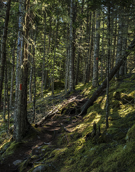 Deer Isle  Maine Hiking Trail, Photo by Carter Grotta